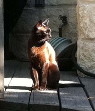 Enjoying the sunshine on the deck.